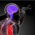 Thói quen tai hại gây ảnh hưởng lớn đến hoạt động của não mà nhiều người vẫn đang mắc phải
